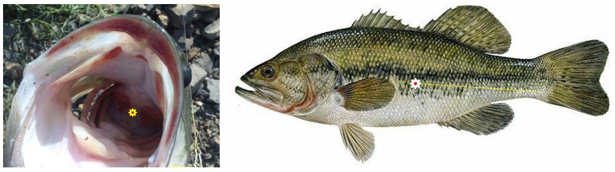 Descompresion del Bass