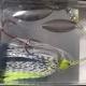 Señuelo Spinnerbait Baitsfishing 1/2 Oz